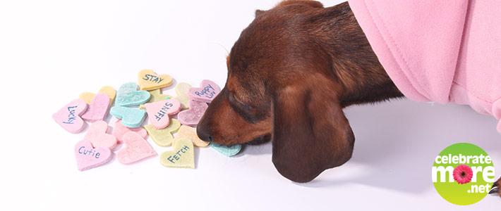 Valentine's Puppy Treats